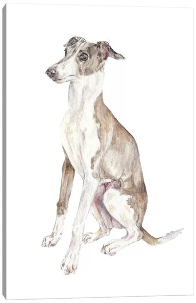 Italian Greyhound Canvas Art Print