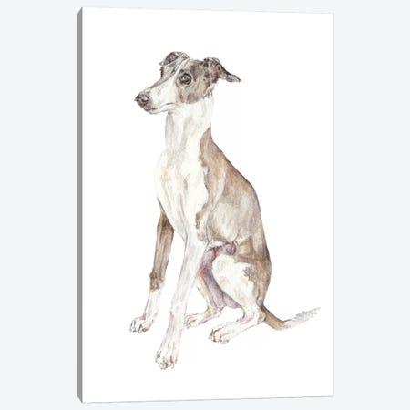 Italian Greyhound Canvas Print #RGF47} by Wandering Laur Canvas Art Print
