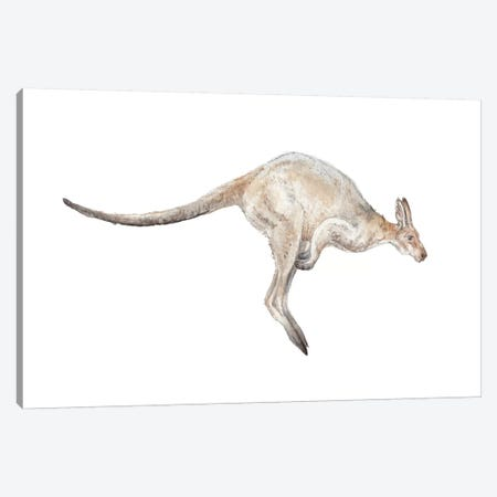 Kangaroo In Mid-Jump Canvas Print #RGF49} by Wandering Laur Canvas Wall Art