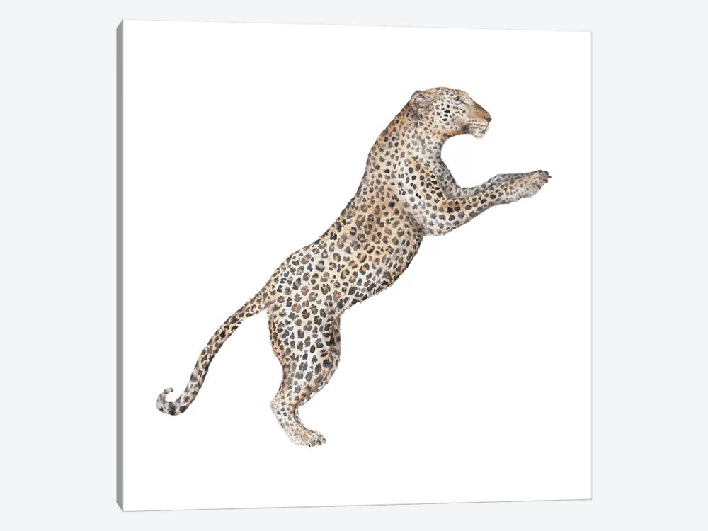 Leaping Leopard by Wandering Laur 1-piece Canvas Print