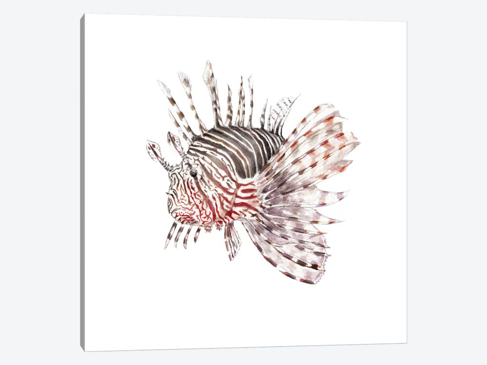 Lionfish by Wandering Laur 1-piece Canvas Print