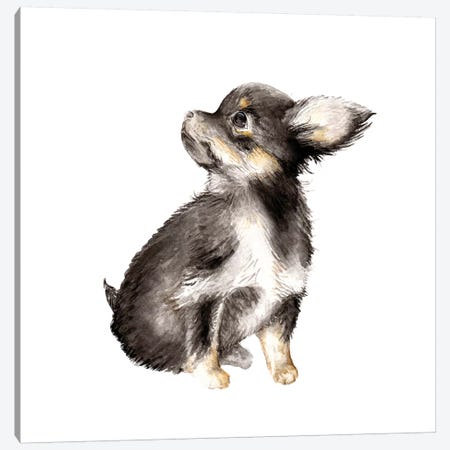 Long-Haired Chihuahua Canvas Print #RGF55} by Wandering Laur Canvas Artwork