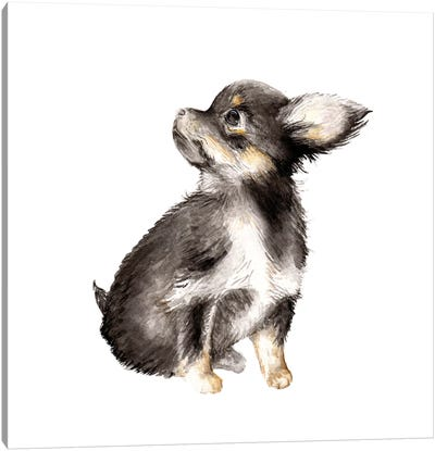 Long-Haired Chihuahua Canvas Art Print