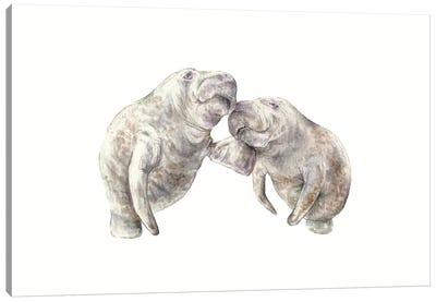 Manatees Canvas Art Print