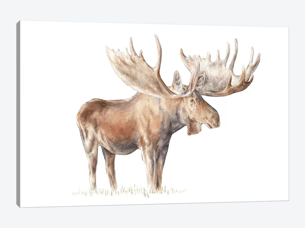 Moose by Wandering Laur 1-piece Canvas Art Print