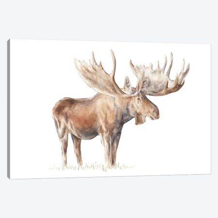 Moose 3-Piece Canvas #RGF59} by Wandering Laur Canvas Art Print