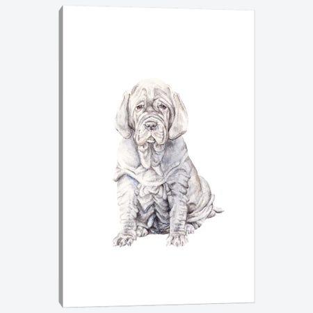 Neopolitan Mastiff Puppy Canvas Print #RGF61} by Wandering Laur Canvas Wall Art