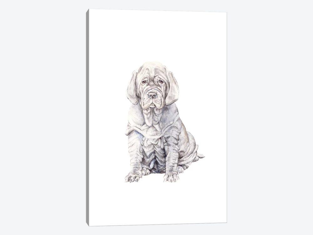 Neopolitan Mastiff Puppy by Wandering Laur 1-piece Canvas Art