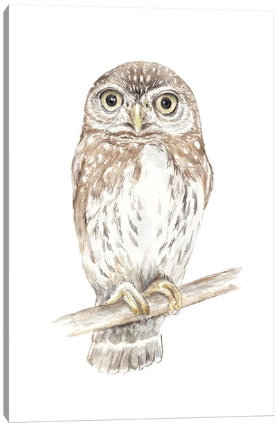 Northern Pygmy Owl Canvas Art Print