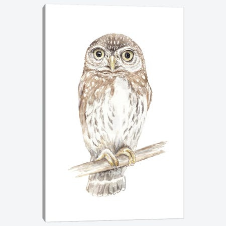 Northern Pygmy Owl Canvas Print #RGF62} by Wandering Laur Canvas Wall Art
