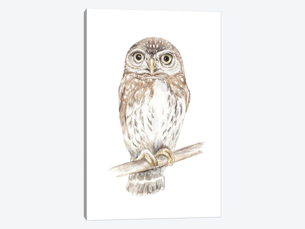 Northern Pygmy Owl by Wandering Laur 1-piece Art Print