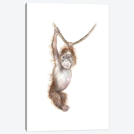Baby Orangutan Canvas Print #RGF63} by Wandering Laur Canvas Art