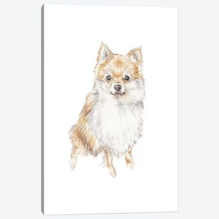 Pomeranian Canvas Print #RGF67} by Wandering Laur Art Print