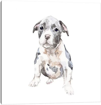 Pit Bull Puppy Canvas Art Print