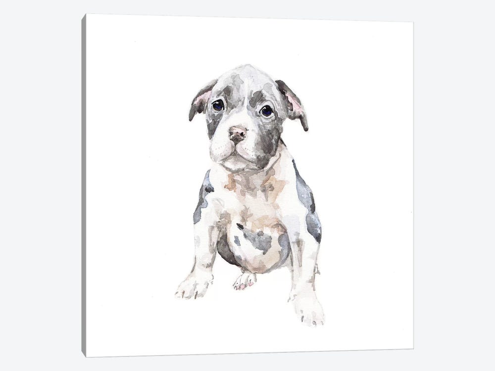 Pit Bull Puppy by Wandering Laur 1-piece Canvas Artwork