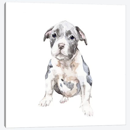 Pit Bull Puppy 3-Piece Canvas #RGF69} by Wandering Laur Canvas Art