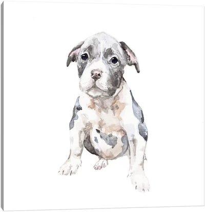Pit Bull Puppy Canvas Art Print