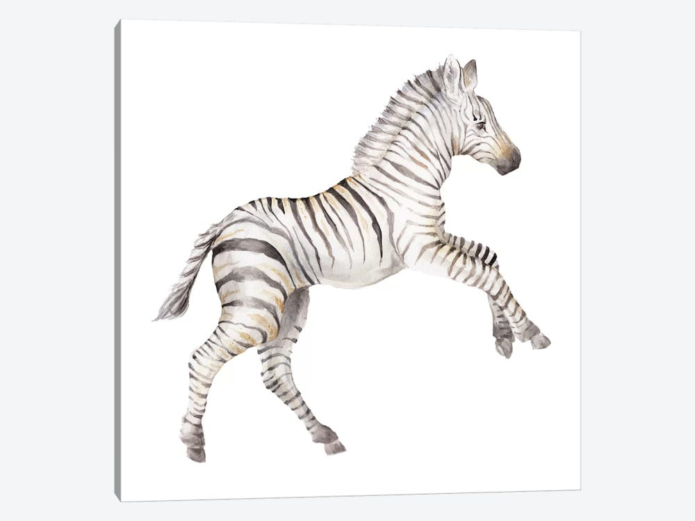 Baby Zebra by Wandering Laur 1-piece Canvas Wall Art