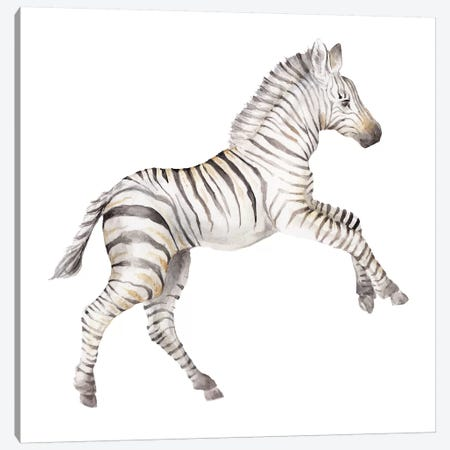 Baby Zebra Canvas Print #RGF6} by Wandering Laur Canvas Art Print