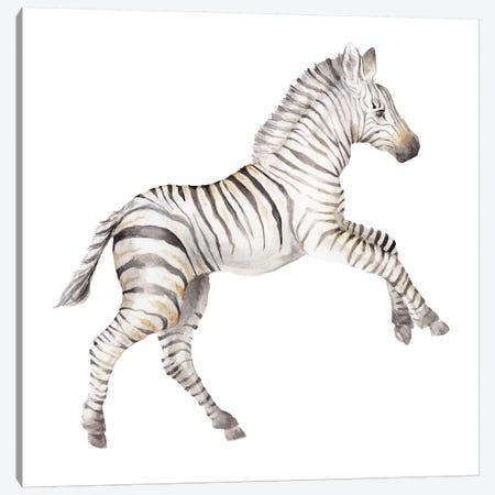 Baby Zebra Canvas Print #RGF6} by Wandering Laur Canvas Art Print