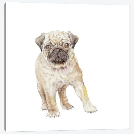 Pug Puppy Canvas Print #RGF70} by Wandering Laur Art Print