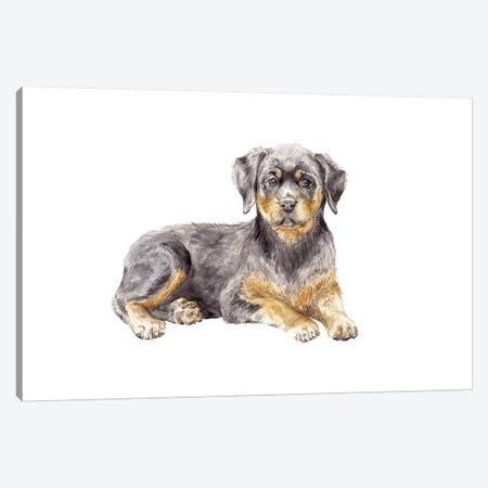 Rottweiler Puppy Canvas Print #RGF72} by Wandering Laur Canvas Art Print