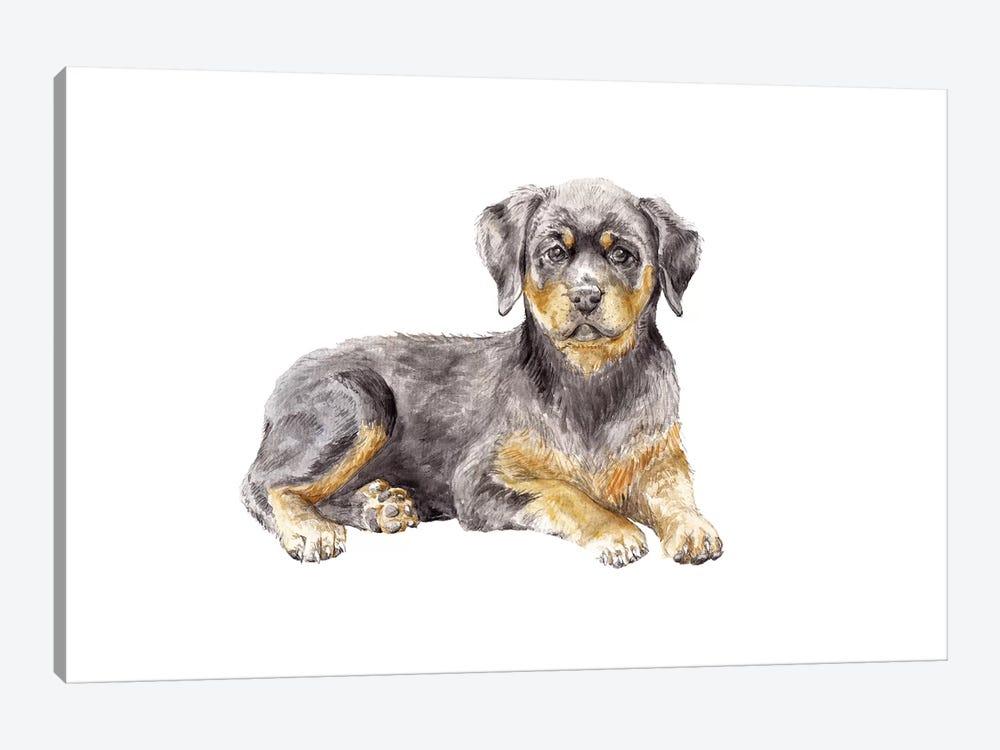 Rottweiler Puppy by Wandering Laur 1-piece Canvas Artwork