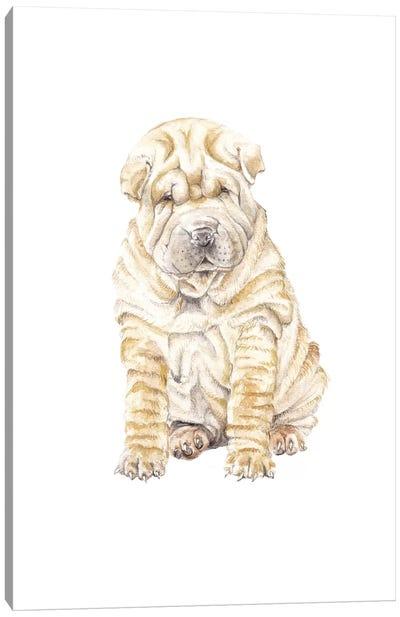 Shar Pei Canvas Art Print