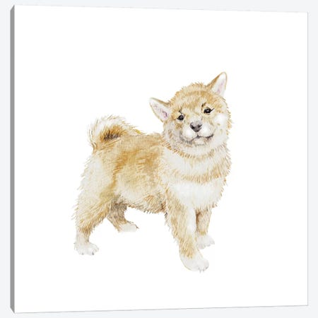 Shiba Inu Puppy Canvas Print #RGF75} by Wandering Laur Canvas Wall Art