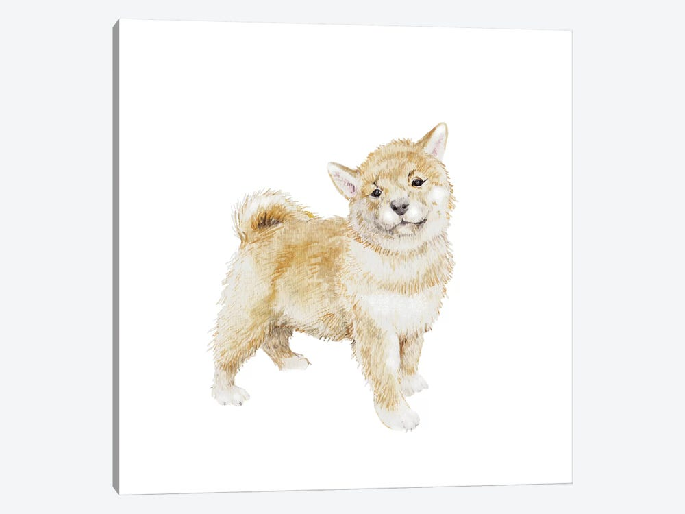 Shiba Inu Puppy by Wandering Laur 1-piece Canvas Print