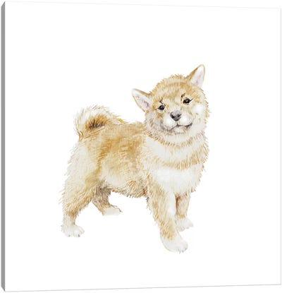 Shiba Inu Puppy Canvas Art Print