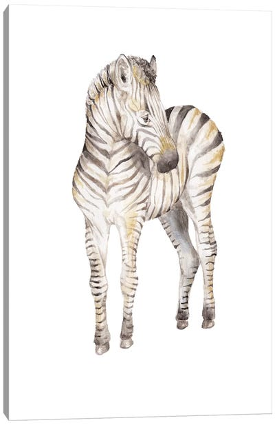 Shy Baby Zebra Canvas Art Print