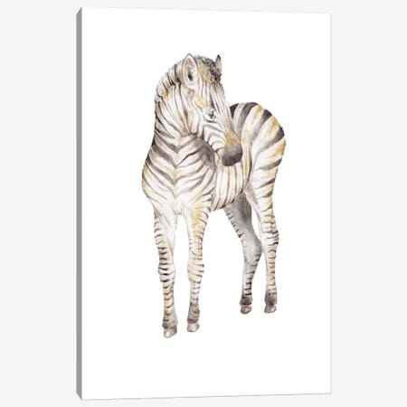 Shy Baby Zebra Canvas Print #RGF76} by Wandering Laur Canvas Wall Art