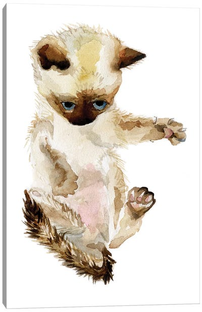 Siamese Kitten Canvas Art Print