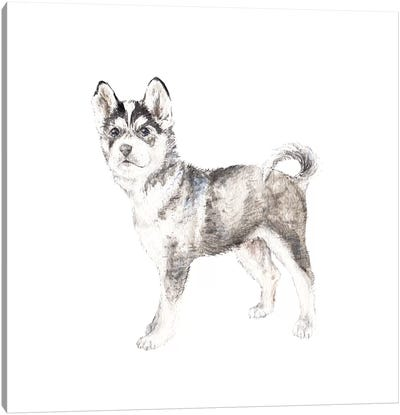 Siberian Husky Canvas Art Print