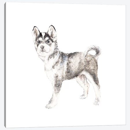 Siberian Husky Canvas Print #RGF78} by Wandering Laur Canvas Print