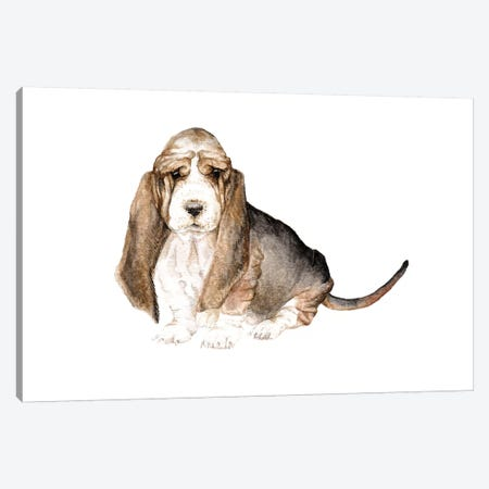 Basset Hound Canvas Print #RGF7} by Wandering Laur Canvas Art Print