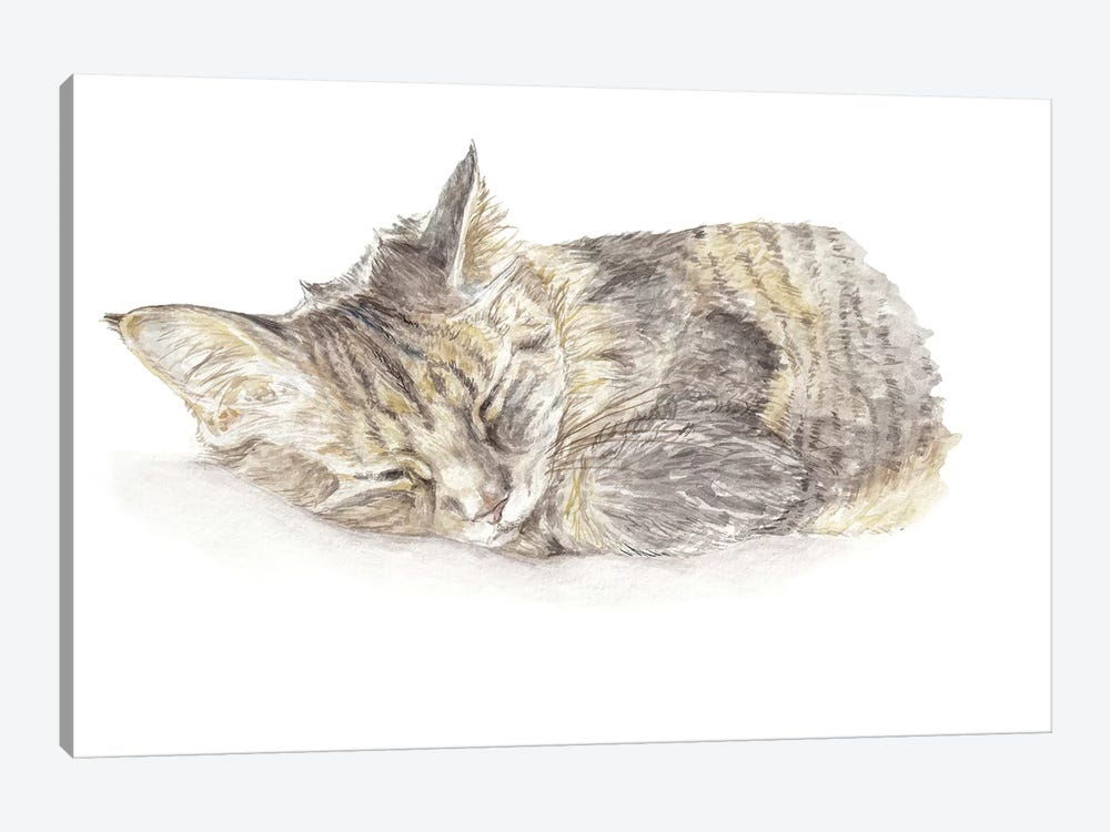 Sleeping Gray Kitten by Wandering Laur 1-piece Canvas Art Print