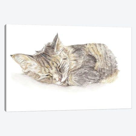 Sleeping Gray Kitten Canvas Print #RGF80} by Wandering Laur Canvas Artwork