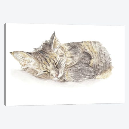 Sleeping Gray Kitten Canvas Print #RGF80} by Wandering Laur Canvas Artwork