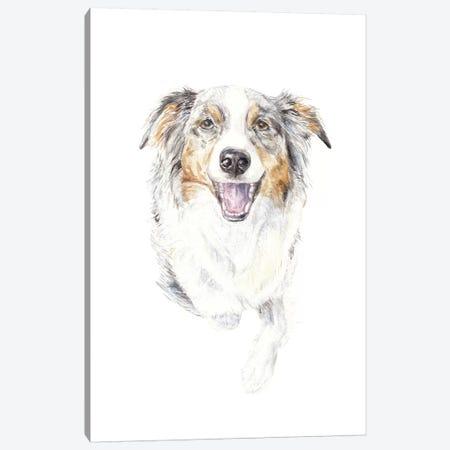 Smiling Australian Shepherd Canvas Print #RGF84} by Wandering Laur Canvas Art Print