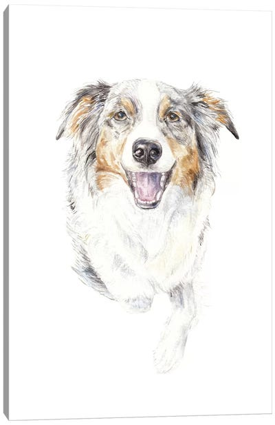 Smiling Australian Shepherd Canvas Art Print