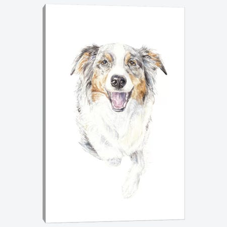 Smiling Australian Shepherd Canvas Print #RGF84} by Wandering Laur Canvas Art Print
