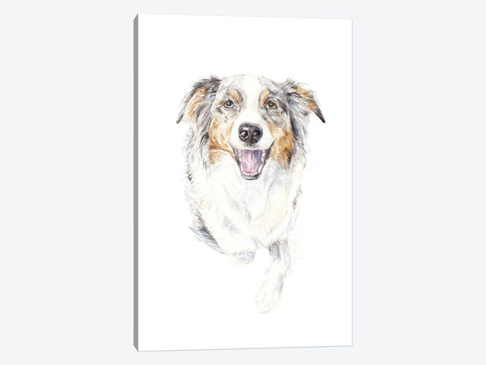 Smiling Australian Shepherd by Wandering Laur 1-piece Canvas Art Print