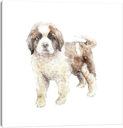 St. Bernard Puppy Canvas Art Print