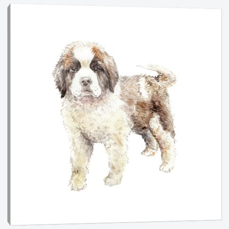 St. Bernard Puppy Canvas Print #RGF85} by Wandering Laur Canvas Print