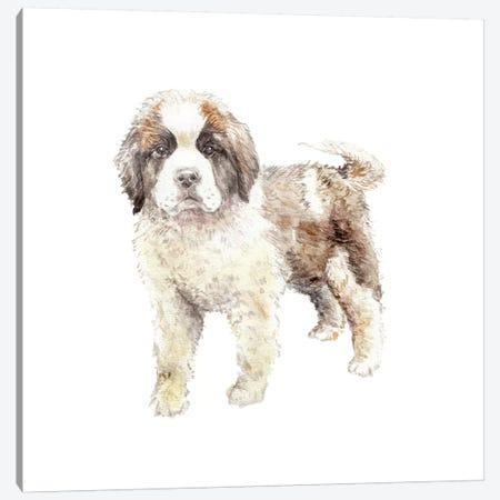 St. Bernard Puppy Canvas Print #RGF85} by Wandering Laur Canvas Print