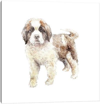 St. Bernard Puppy Canvas Art Print