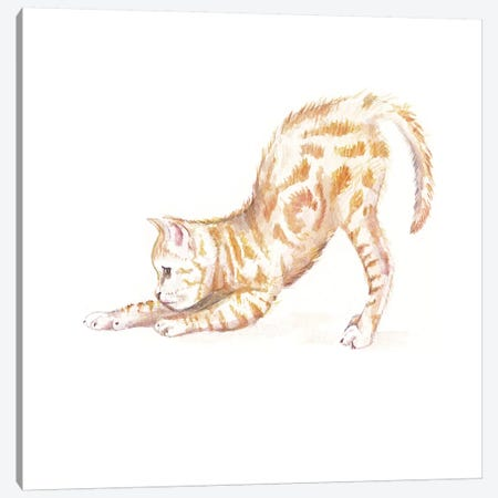 Stretching Ginger Cat Canvas Print #RGF86} by Wandering Laur Canvas Print