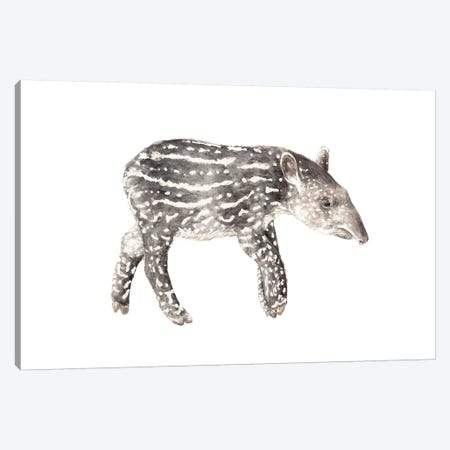 Tapir Calf Canvas Print #RGF89} by Wandering Laur Canvas Artwork